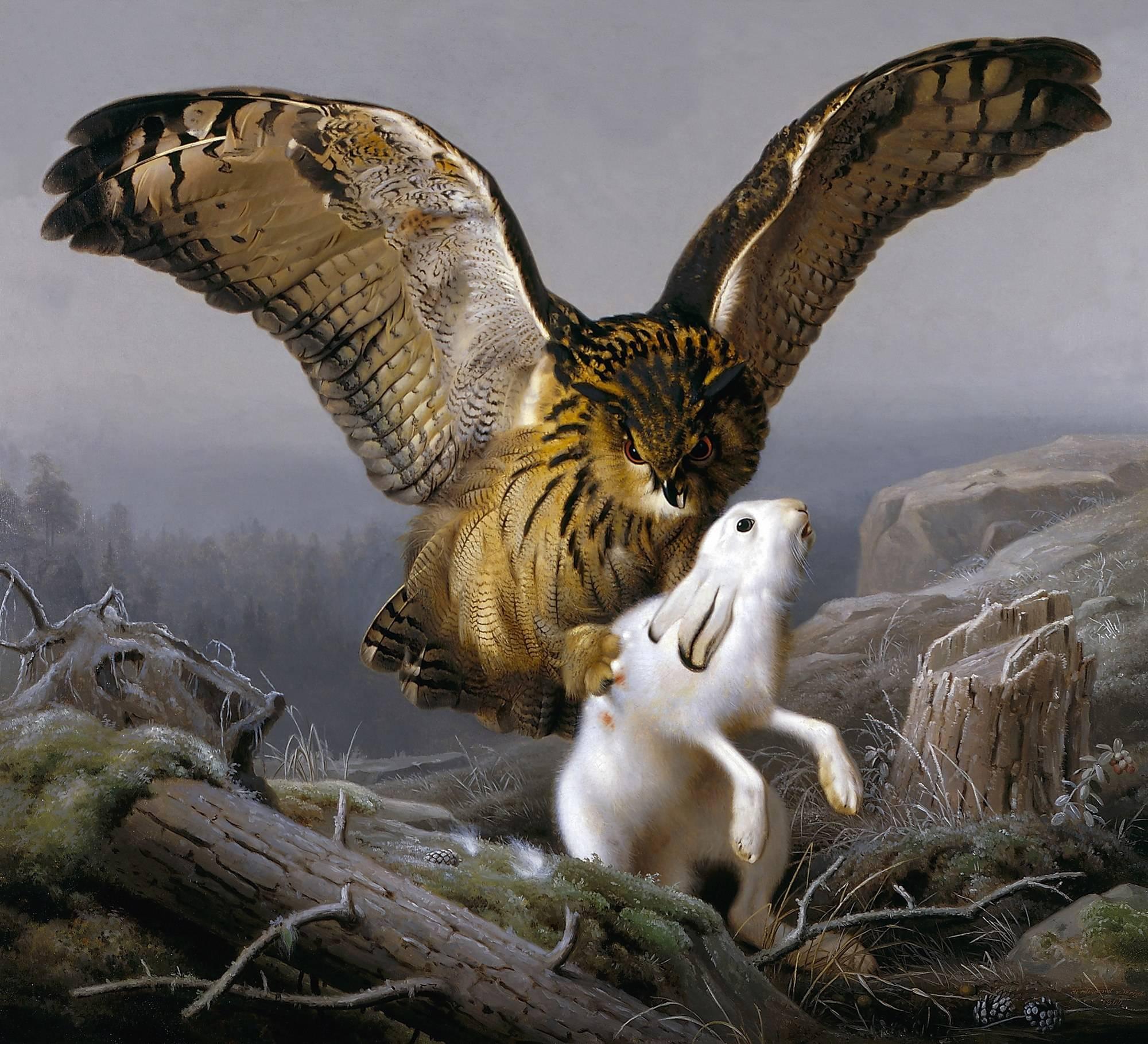как совы ловят зайцев