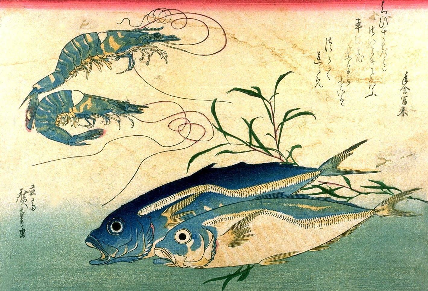 как ловить скумбрию в японском море
