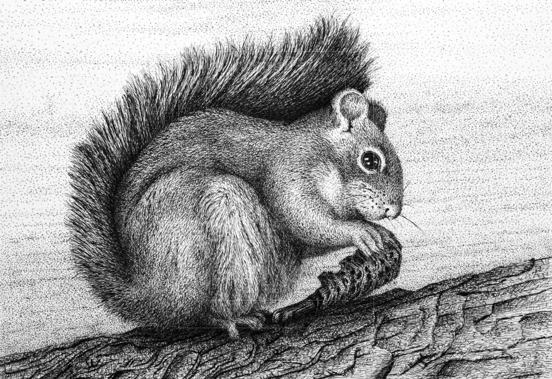Рисунок животные белка 6