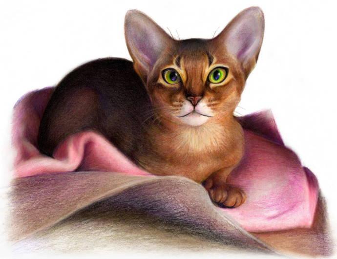 Абиссинианский кот / Работа неизвестного автора 952 -