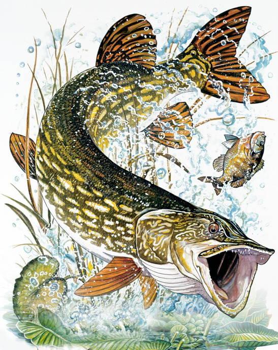 картинки для рыбацких