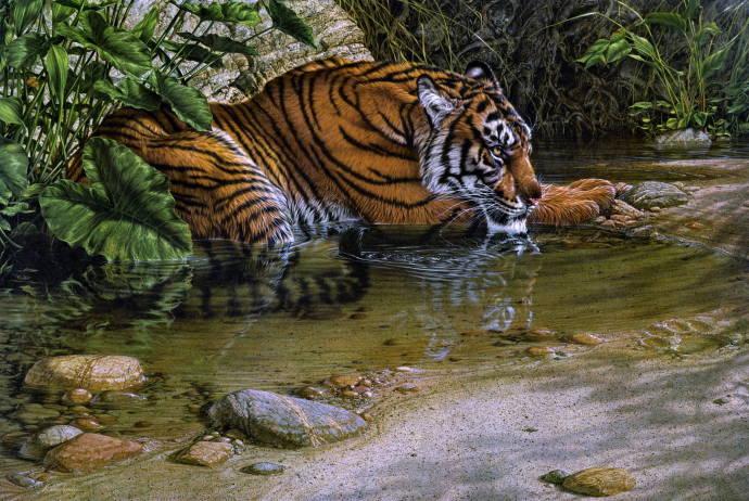 Река тигра / Лии Кромшрёдер - Lee Kromschroeder