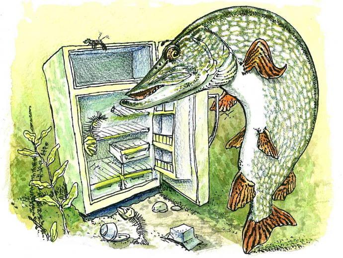 Щука у холодильника / Юмор